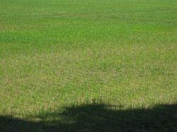 Poučna ekskurzija na riževo polje
